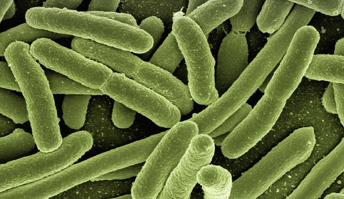 Bacteria / Credit: Pixabay