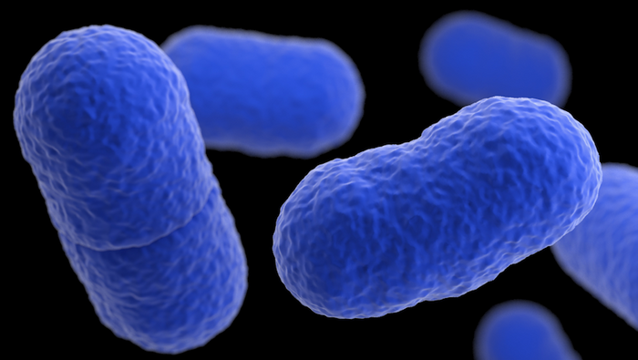 A 3D, computer-generated image of Listeria monocytogenes bacteria, based on SEM imagery. / Credit: CDC/ James Archer