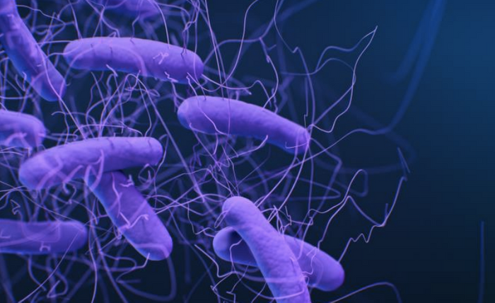 Modified from a medical illustration of Clostridioides difficile bacteria, formerly known as Clostridium difficile / Credit: CDC/ Antibiotic Resistance Coordination and Strategy Unit / Medical Illustrator: Jennifer Oosthuizen