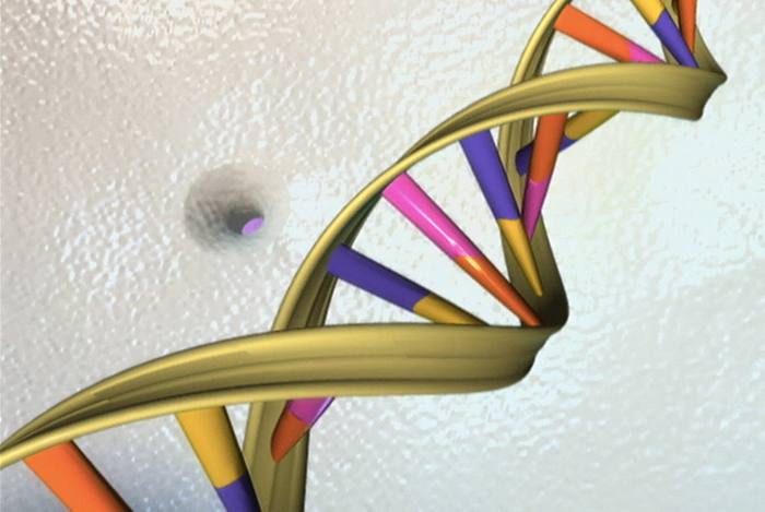 NIH Image Gallery DNA Double Helix / Credit: National Human Genome Research Institute, National Institutes of Health.