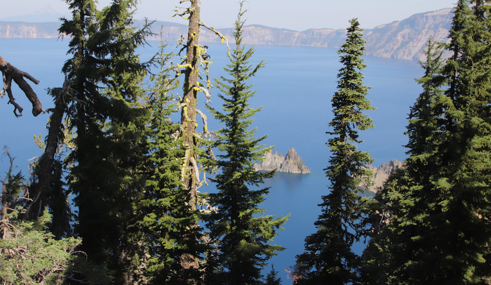 Trees surround Crater Lake in Oregon / Image credit: Carmen Leitch