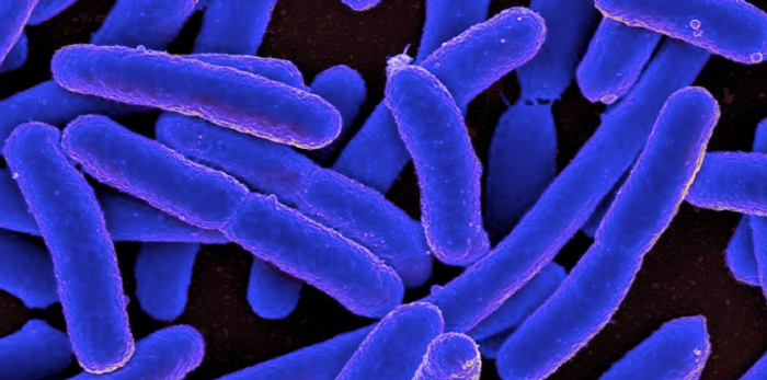 A digitally-colorized SEM of Escherichia coli / Credit: National Institute of Allergy and Infectious Diseases (NIAID)