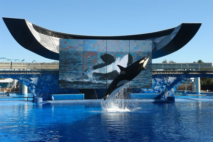 Sea World offers Orca shows at its various theme parks.