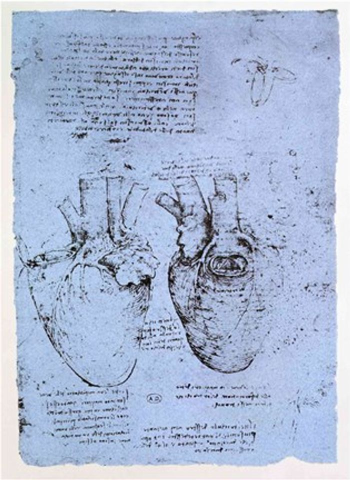 In the 1490s, Leonardo Da Vinci began to investigate the heart and its work. This sketch was part of his study of the human anatomy and the circulation system./ Credit: Public domain