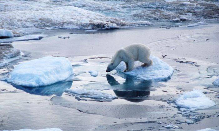 Polar bears in the Arctic are finding life to be getting tougher with each passing year, study finds.