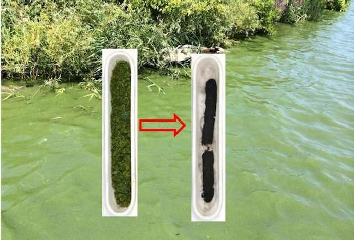 "Algae collected from a bloom in Lake Erie and the ""hard carbon"" it was turned into"