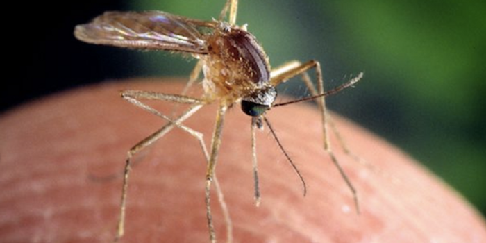 Mosquitoes carry disease, including West Nile Virus / Image credit: Pixnio
