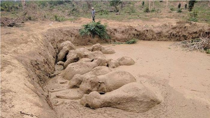 11 Asian Elephants were trapped inside of a massive mud pit in Cambodia.
