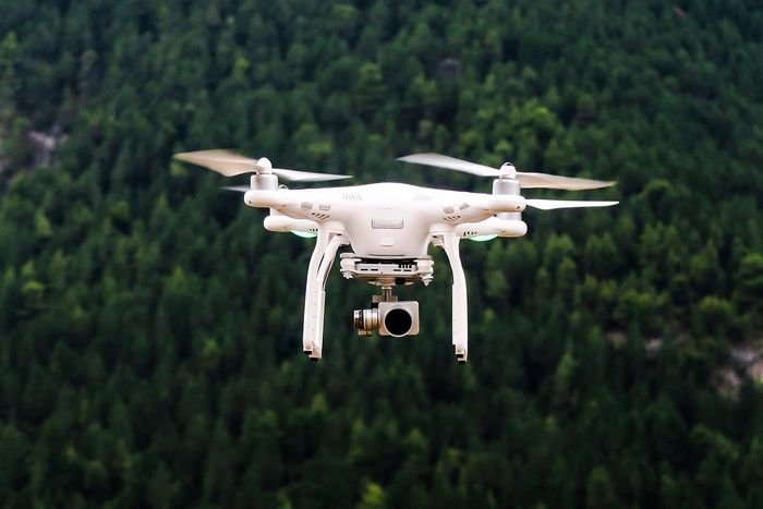 Can animals become accustomed to drones buzzing around their habitats?