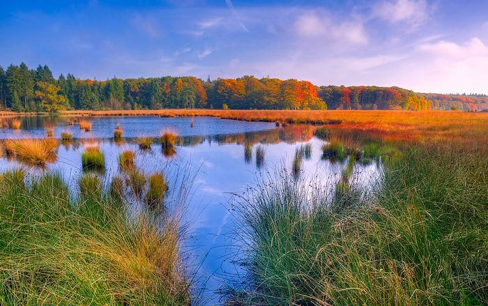 Marshes have incredible carbon storage capabilities. Photo: Pixabay