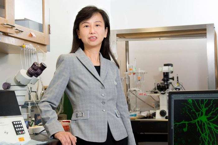 Zhen Yan, PhD, professor, Department of Physiology and Biophysics, has founded a startup company based on the promising results. / Credit: Sandy Kicman/University at Buffalo
