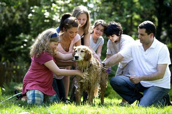 Adding a dog to the family can reduce stress for children with autism