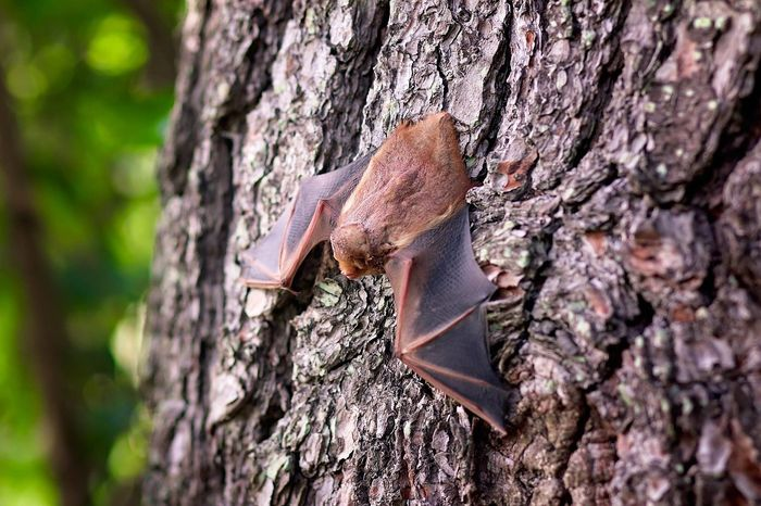 Bats use their own soundwaves to get around obstacles, a skill known as echolocation.
