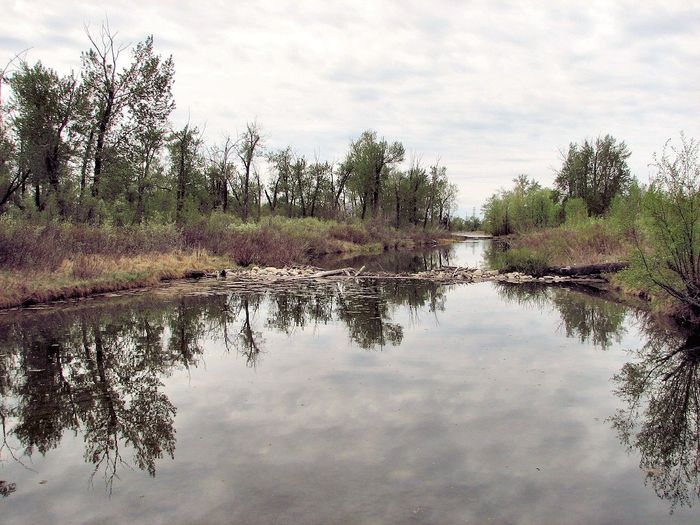 Beaver dams may remove unwanted pollutants from rivers and streams.