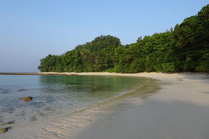 Coastal forests help prevent sediment from reaching coral reefs.