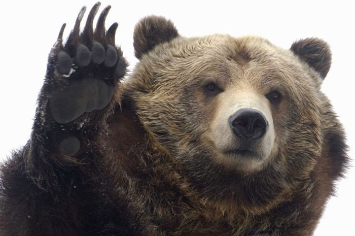 Grizzly bear attacks can be fatal; Todd Orr was one of the lucky ones.