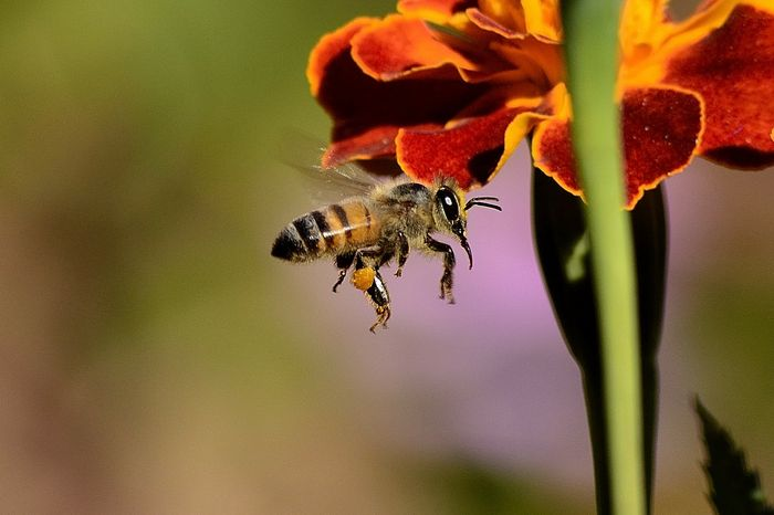 Smarter bees reportedly forage less than their dumber counterparts.