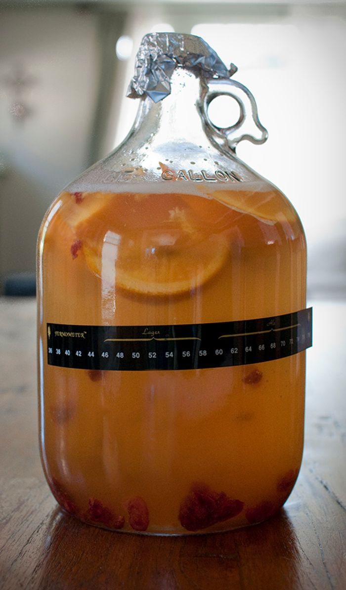 Yeasts that are used to ferment lager-style beers today are examples of highly successful, domesticated interspecies yeast hybrids.