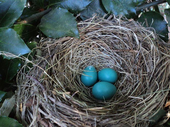A nest full of eggs.