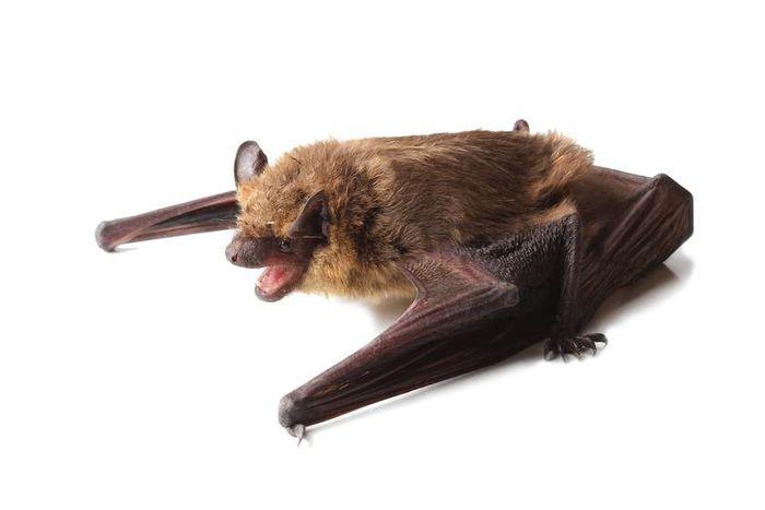 Researchers identified a new bat herpes virus.