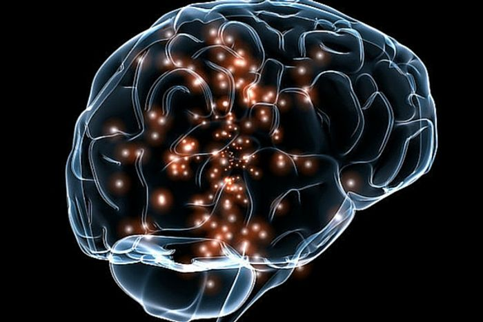 Can scientist upload skills directly to the brain?