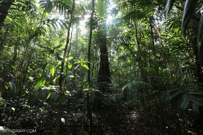 This forest in the Southern Cardamom Mountains in Cambodia is a huge carbon sink. Photo: Rhett A. Butler, Mongabay