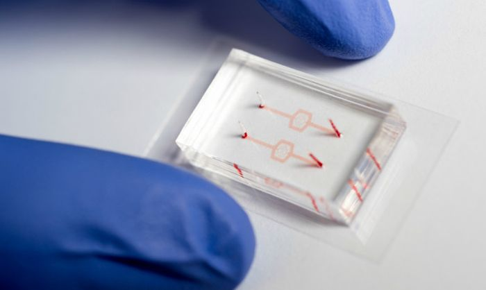 Researchers fabricated model blood vessel systems that include artificial blood vessels with diameters as narrow as the smallest capillaries in the body.
