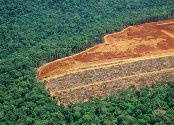 Fragmented forest patches like this are the perfect breeding grounds for mosquitoes. Photo: Conservation International Blog