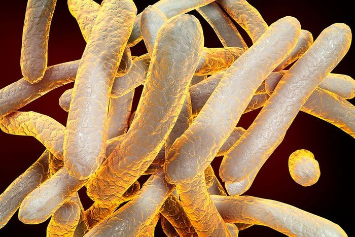 """Mycobacterium tuberculosis"" is an invasive bacterium responsible for tuberculosis. Credit: Thinkstock/University of Montreal"