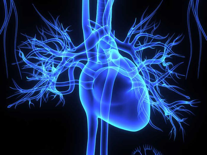 Due to its high metabolic activity, the scientists looking into the effects of zinc deprivation have focused on studying the heart muscle. (image: 7activestudio/ iStock)