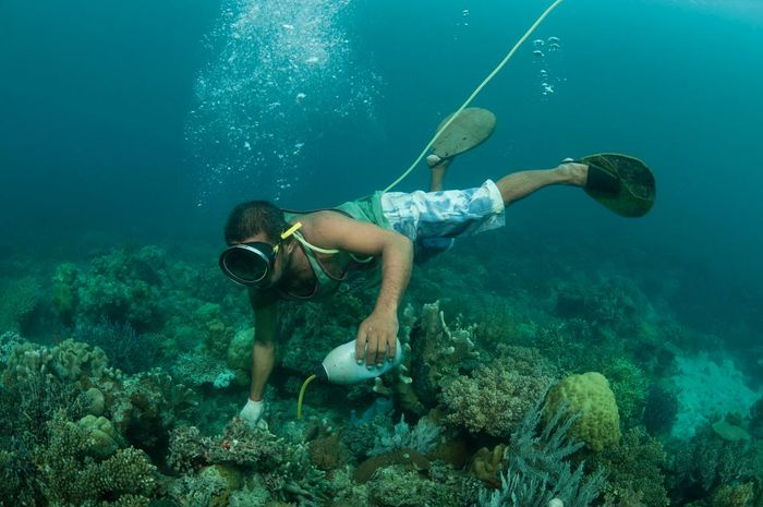 A fisherman illegally applies cyanide to a coral reef crevice off the island of Palawan, in the Philippines.