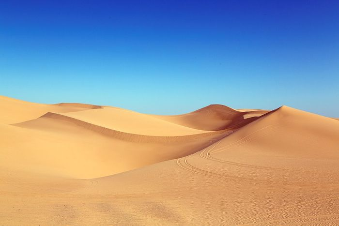 What did the Sahara used to look like? Photo: Pixabay