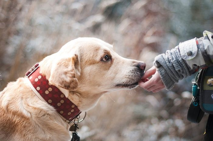 Can a human breast cancer drug save our furry friends? Photo: Pixabay