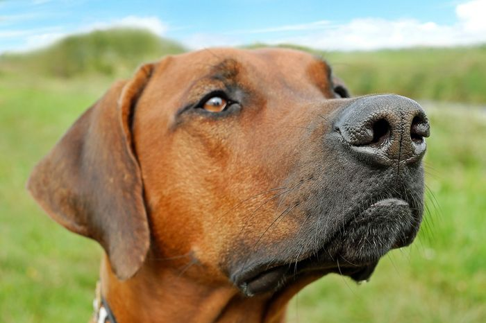 A dog's nose can track scents for long distances, so why aren't we using dogs to help with animal conservation and tracking?