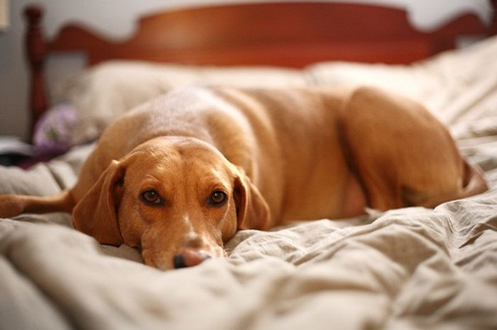 Pets may be beneficial to sleep, depending on who you are, of course.