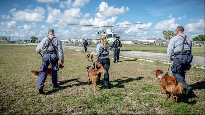 Search and rescue dogs experience stress when flying, but quickly overcome it to do their job. / Credit: Erin Perry