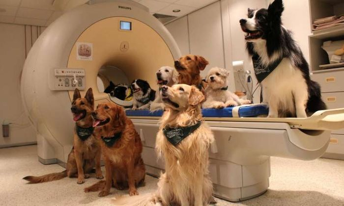 Dogs pose for a photo next to the fMRI machine used to measure their brain activity.