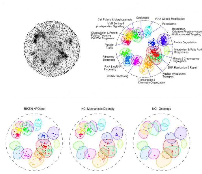 """The top map (left) shows how thousands of genes interacts in yeast cells to orchestrate cellular life. On the right are shown 17 basic bioprocesses in different colours where dots represent the most important genes involved. The bottom maps were created by linking a chemical compound to a bioprocess, telling drug makers where to look for drugs that are most likely to target a specific disease. For example, the RIKEN library has more potential anti-cancer compounds (under """"Mitosis and Chromosome Segregation"""" in red and """"DNA Replication & Repair"""" in mint green) than other libraries. / Credit: Jeff Piotrowski"""