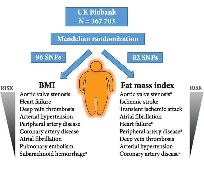 Image via European Heart Journal: Observed associations of BMI and fat mass index with cardiovascular conditions in UK Biobank. aSignificant association at the P<0.05 level; all other associations are significant at a Bonferroni threshold of P<3.6×10−3 (corrected for 14 outcomes).