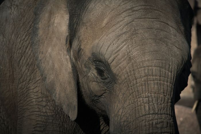Can we save the elephants?
