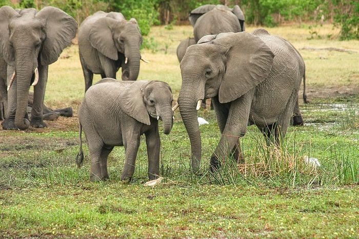New research suggests high numbers of tourists are stressing elephants out. Photo: Pixabay