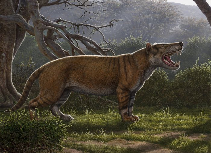 An artist's impression of the newly discovered beast.