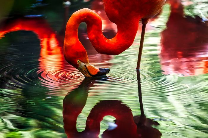 Do flamingos save energy by standing still on just one leg?