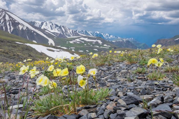 Signs of spring are coming earlier in the Arctic. Photo: Newsweek