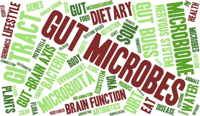 Gut microbes affect IBD.