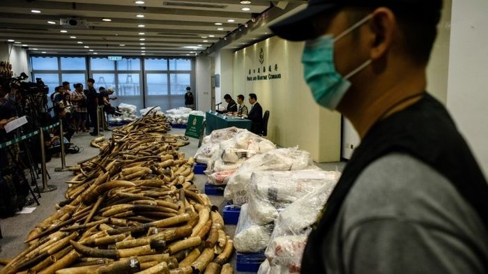 8 tons of ivory lay on the floor after being confiscated by Hong Kong officials.