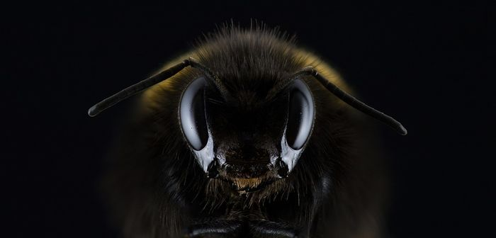 A species of bee long thought to be extinct has been rediscovered after 80 years.
