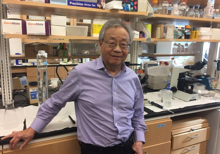 Kenneth Tung, M.D., of the University of Virginia School of Medicine, has discovered an unknown connection between men's testes and the immune system -- a link that could explain infertility and the failure of cancer vaccines. Credit: Josh Barney | UVA Health System