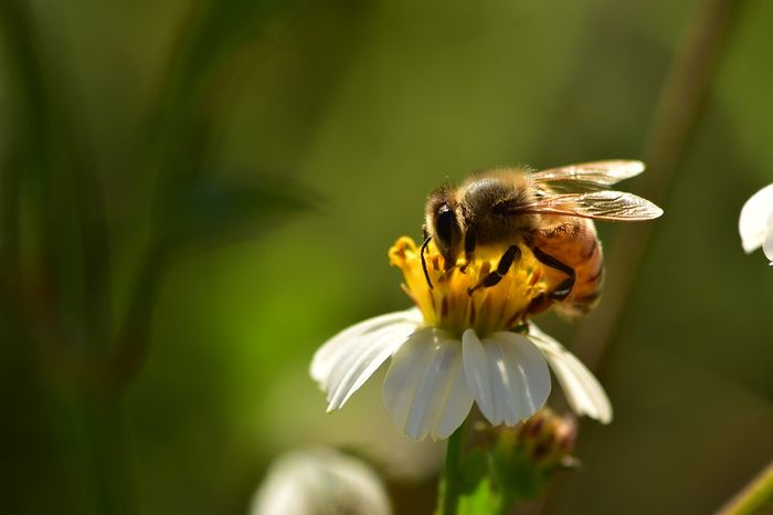 Honey bees are important for the environment, but their declines over the last 20 years are hard to ignore.