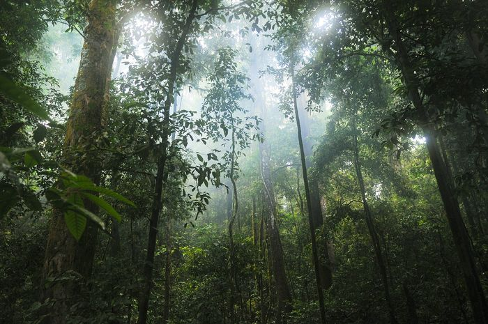 Forest regeneration is a major goal set forth by environmentalists, and one family of trees may be key to it all.
